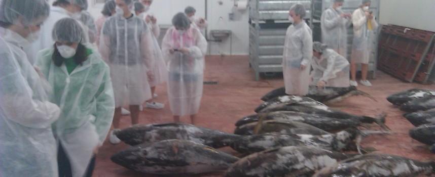 Trabajar en fábricas de pescado en Noruega