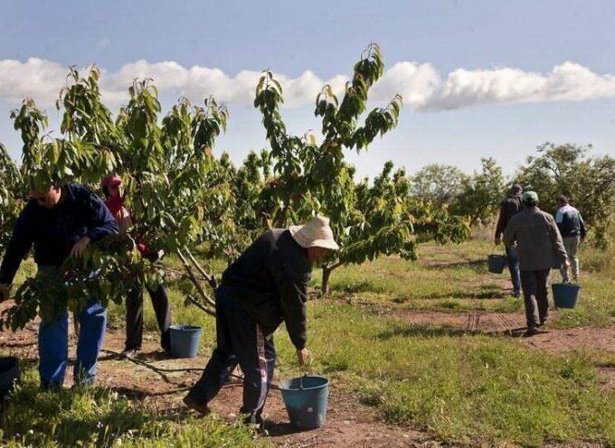 Casi un 70% de los emprendedores tienen más de 40 años y se dedican a los servicios y la agricultura