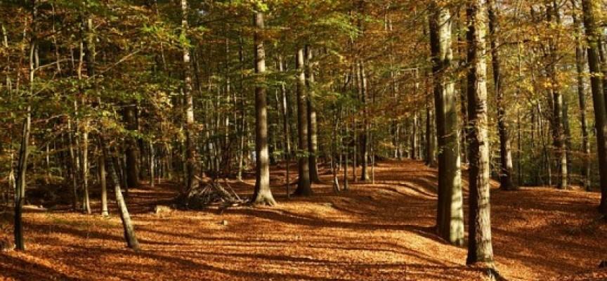 Guía Europea de Observación del Patrimonio Rural