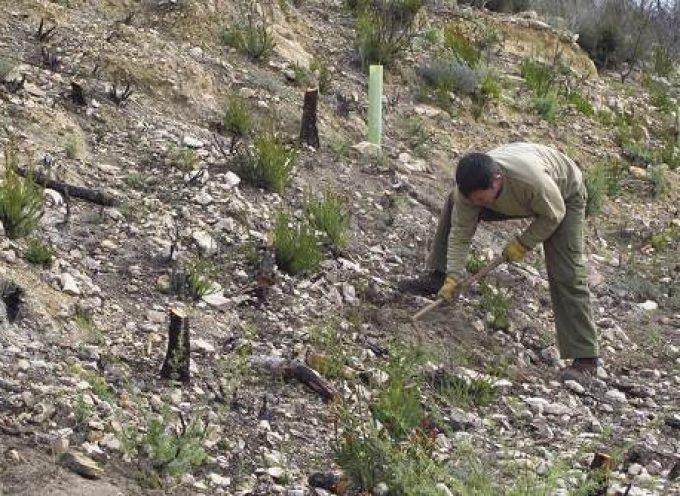 80 empleos en proyectos sociales vinculados a los espacios naturales andaluces