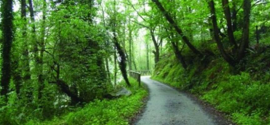 Becas en desarrollo rural y política forestal para titulados superiores