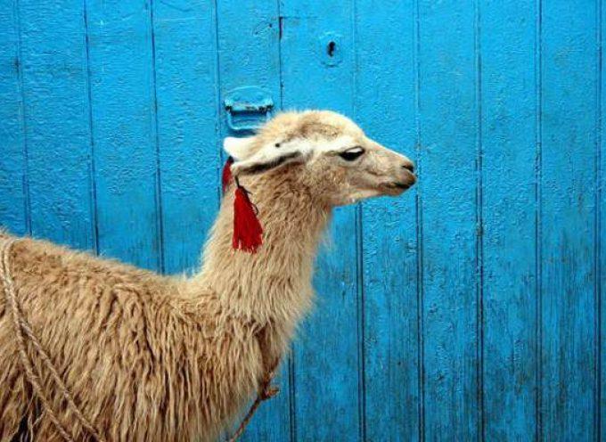 20 empresas donde encontrar empleo en Perú