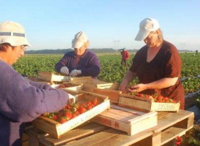 """Proyecto """"Mujeres Creando Empleo"""" Especialmente para mujeres del medio rural."""