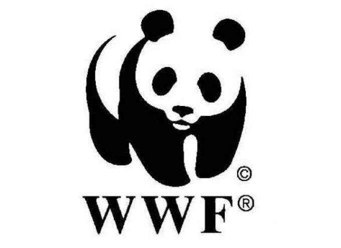 Trabajar en la Organización WWF