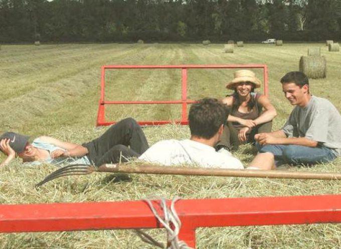 Guía para trabajar en el campo en Australia