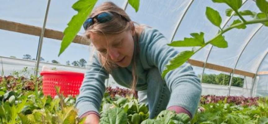 Un estudio concluye que la agricultura ecológica es más rentable que la convencional