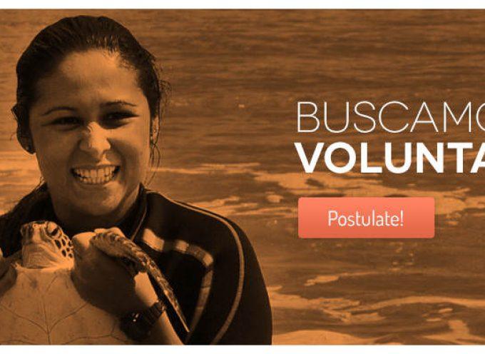 Programa de voluntariado con tortugas en Uruguay
