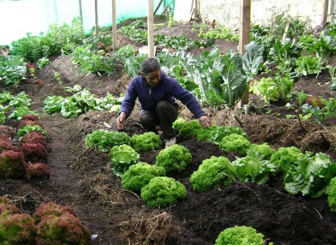 Mijas pone a disposición de desempleados y jubilados varios huertos urbanos