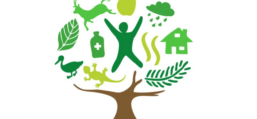 Ponencias y conclusiones del Seminario de la Red Rural Europea 'Revitalizar las zonas rurales a través de la innovación empresarial'