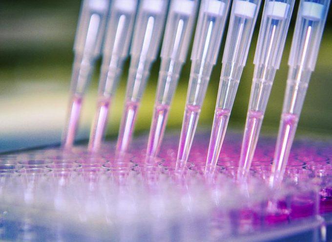 Webs de referencia del sector investigación, biotecnológico…