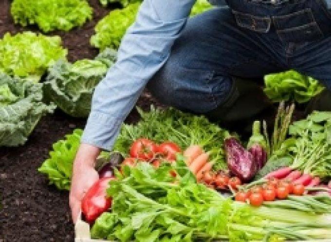 Emprendedores y empresarios 'seducidos' por las posibilidades de la agricultura ecológica