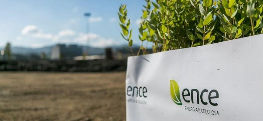Ence prevé crear 750 puestos de trabajo en su nueva planta de biomasa.
