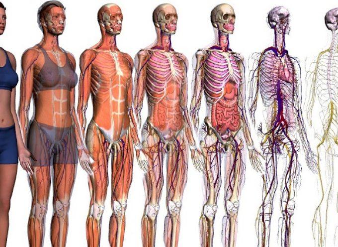 5 apps sobre el cuerpo humano para aprender y entender cómo funcionamos