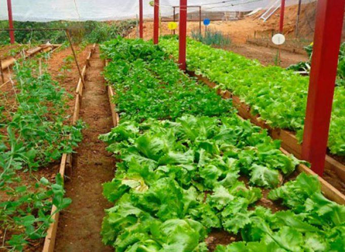 Diez novedades que revolucionarán el sector agroalimentario