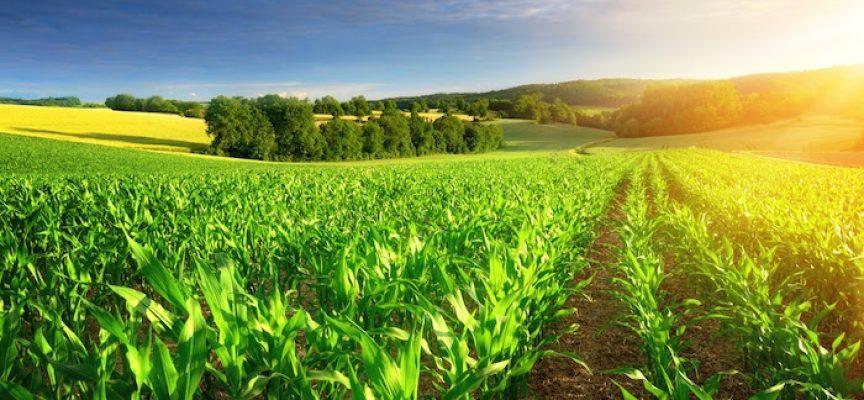 Aprender a cultivar en un clima cambiante: formación gratuita para ayudar al sector agrario a adaptarse al cambio climático