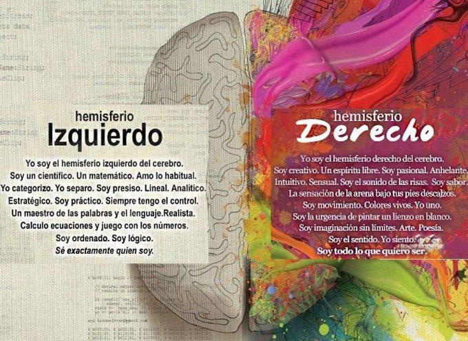 El cerebro en datos [infografía]