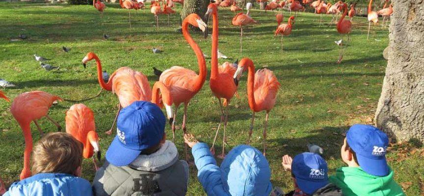 Empleo Zoo Madrid-Trabajo con Animales