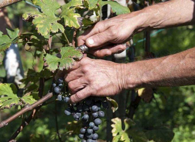 Información sobre la recolección de la fruta y la vendimia en Francia 2017