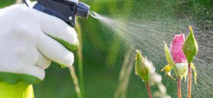 Nueva app de productos fitosanitarios