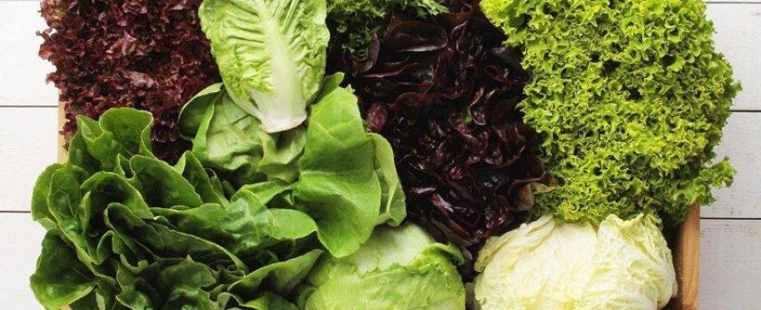 Una planta de producción de frutas y hortalizas congeladas creará 70 empleos en Adra