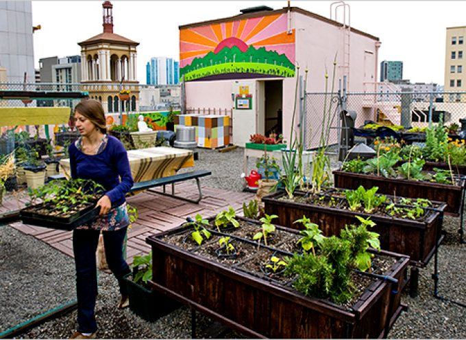 Guía de agricultura urbana y periurbana: huertos urbanos