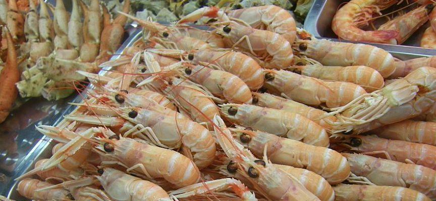 Estero de mariscos generará 600 empleos en Cádiz