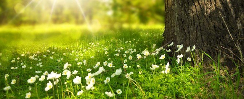 5 recursos para explicar al alumnado qué significa sostenibilidad
