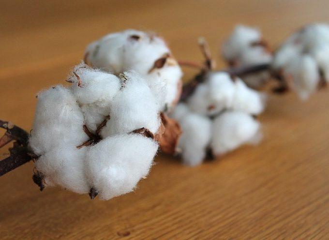 ¿Pasaría tu idea de negocio la prueba del algodón?