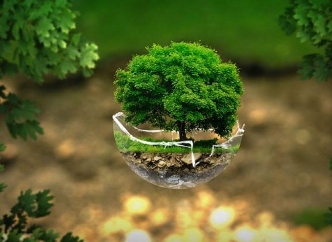 Las 10 'apps' para cuidar el medio ambiente en 2019