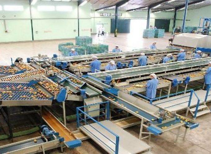 50 puestos de trabajo de encajador de cítricos en El Puerto de Sagunto (Valencia)