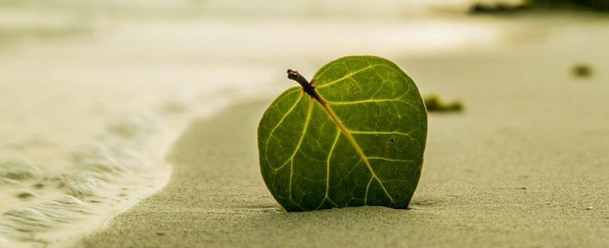 Qué son los empleos verdes