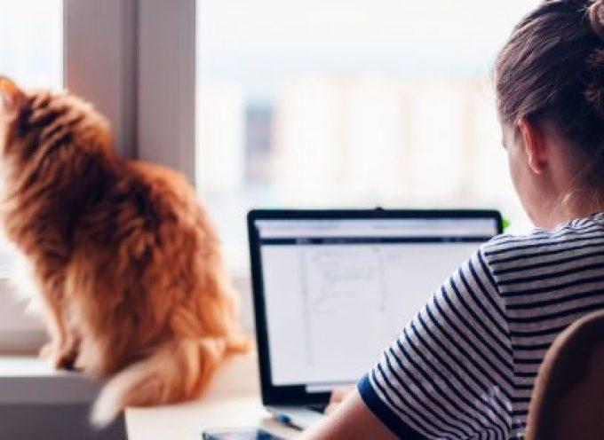 'Satélites Digitales', talleres online gratuitos para la búsqueda de empleo