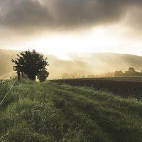 10 tipos de negocios de éxito para el entorno rural
